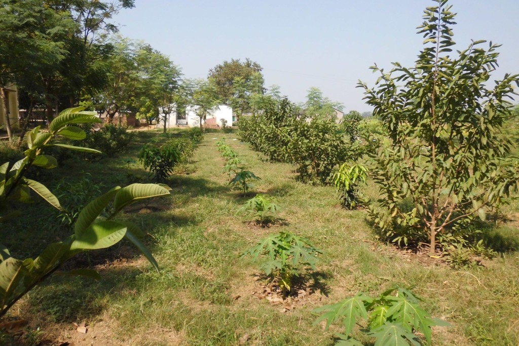 fruit trees behind the Hall